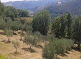 V Itálii, v Gubbio, panství u jezera. 7