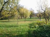 Prodám zahradu v Lobodicích o výměře 1.734m2 1