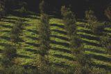 Turistická agrokomplexová značka s bio olivovým olejem 4