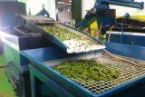 Turistická agrokomplexová značka s bio olivovým olejem 9