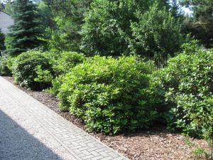 idealni RD s velkou zahradou-Plzen-sever 4