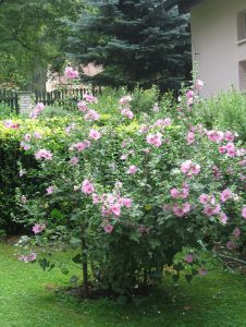 idealni RD s velkou zahradou-Plzen-sever 14