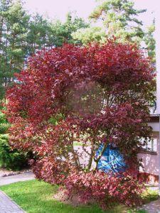 idealni RD s velkou zahradou-Plzen-sever 8