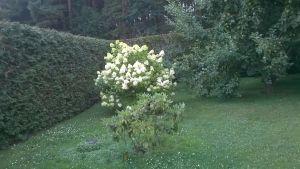 idealni RD s velkou zahradou-Plzen-sever 17