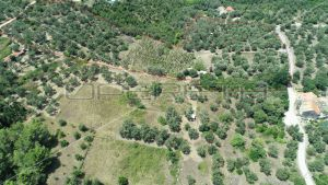 Object 100 m2 and agricultural land 23.260 m2 in Sipanska Luka, Dubrovnik 4