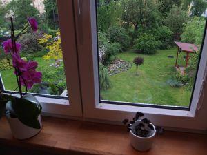Prodej bytu po rekonstrukci s krásnou zahradou v Plzni, příp. výměna za RD 9