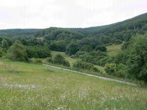 18 ha pozemek s územním plánováním pro developerský projekt 4