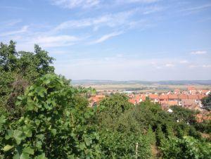 Prodej pozemku v obci Zaječí 2