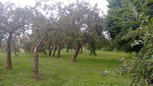 Prodej stavebních pozemků – Velký Týnec, okr. Olomouc 5