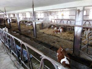 Zemědělský objekt 4