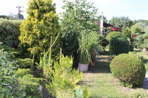 Prodám zahradu s obytnou chatou u Chomutova 11