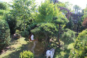 Prodám zahradu s obytnou chatou u Chomutova 17