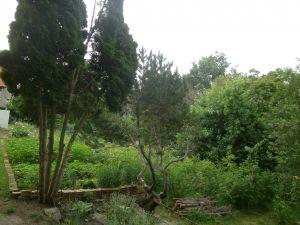Prodám chatu se zahradou Kadaň 2